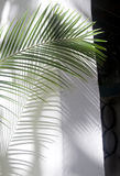 Palm frond shadow Royalty Free Stock Image