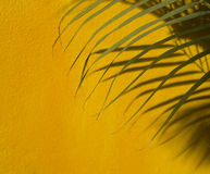 Palm frond shadow Stock Photos