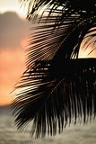 Palm frond silhouette. Royalty Free Stock Images