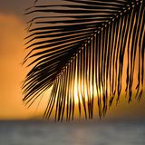 Palm frond sunset. stock photos