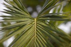 Palm frond Stock Photos