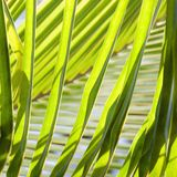 Palm fronds. Stock Photo