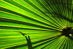 Palm Fronds Stock Photo