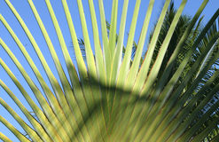 Palm fronds Royalty Free Stock Photography