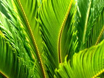 Palm fronds Stock Images