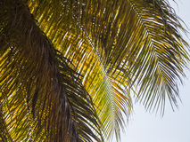 Palm Fronds Royalty Free Stock Photos