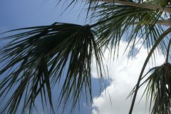 Palm Fronds Against Cloud and Sky. Palm fronds accent the blue sky and white clouds near the Intracoastal Waterway in Jacksonville Beach, Florida royalty free stock photography