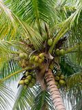 Palm fronds. Close up of beautiful swaying palm fronds stock images