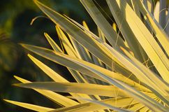 Palm Fronds Stock Image