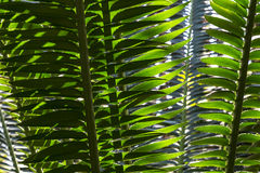 Palm Fronds. Exotic palm fronds in a botanical garden setting stock image