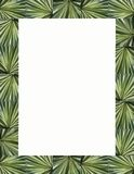 Palm Fronds Frame & Border Stock Photography
