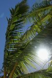 Palm Fronds. Green Palm Fronds against a blue sky on Ile Des Pins, New Caledonia stock photos