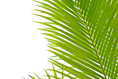 Palm fronds in an outdoor setting royalty free stock images