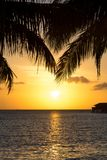 Palm fronds over the setting sun royalty free stock photography