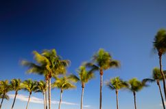 Palm fronds swaying in the wind artistic long exposure image Stock Photography