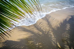 Palm Fronds Tropical Beach Stock Image