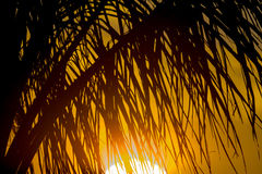 Palm fronds. Tropical Palm fronds at sunset stock image