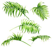 Palm Fronds Watercolor Sketch vector illustration