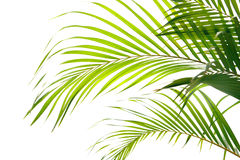 Free Palm Fronds Waving In The Wind, Royalty Free Stock Photo - 4418175
