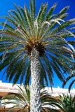 Palm in front of hotel in Tenerife Island Royalty Free Stock Photo