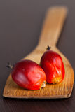 Palm fruit Stock Images