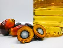 Palm fruits and palm oil, one fruit is cut show kernel Royalty Free Stock Images
