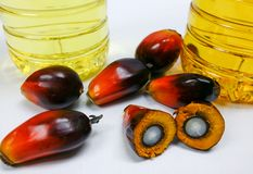 Palm fruits and palm oil, one fruit is cut to show its kernel Royalty Free Stock Image