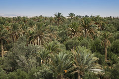 Palm garden. In vicinities Palmira Royalty Free Stock Photo