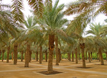 Palm garden royalty free stock image
