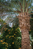 Palm garden. Tropical exotic palm garden with flowers Royalty Free Stock Photography