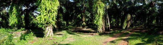 Palm Garden Stock Photography