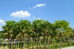 Palm garden Royalty Free Stock Image