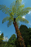 Palm in garden. Stock Photography