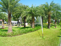 Palm garden. Oil palm plants are monocots and long lifespan and can live to 80 - 100 years Stock Photos