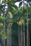 Palm garden beautifying the landscape. RIO CLARO, SP, BRAZIL - JULY 9, 2016 - Palm tree, generic term for family tree Arecaceae, from which are part the coconut Stock Photo