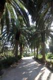 Palm garden-Carthage, Tunisia Stock Image