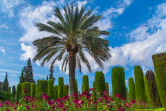 Palm in the garden, Cordoba. Royalty Free Stock Photo