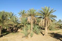 Palm garden in desert village royalty free stock photo