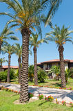 Palm Garden in front of house Royalty Free Stock Photos