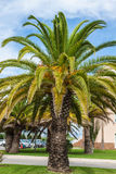 Palm Garden in front of house Stock Photography