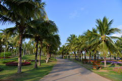 Palm garden Royalty Free Stock Images
