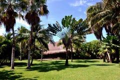 Palm Garden - Mexico Royalty Free Stock Photos