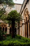 Palm in the garden of a monastery royalty free stock photo