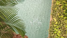 Palm and garden near the pool. Rippling water stock footage