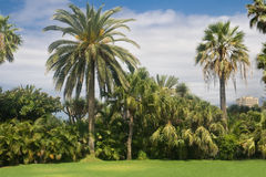 Palm garden in Tenerife Royalty Free Stock Photography