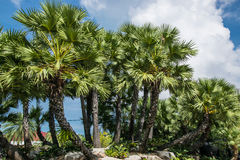 Palm garden. Royalty Free Stock Photo