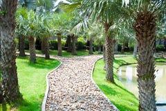 Palm garden Stock Photos