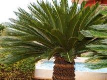 Palm garden Royalty Free Stock Photos