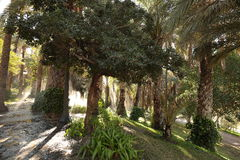 Palm garden watered Stock Image