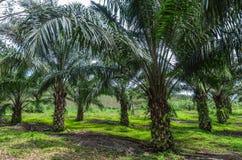 Palm garden Stock Photo